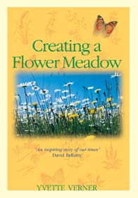 Creating a Flower Meadow - Ivette Verner