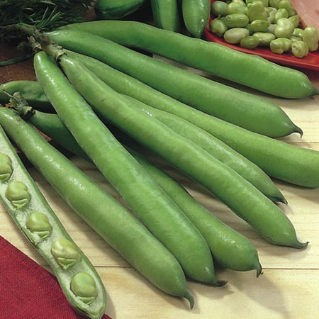Bean (Broad Bean) Aquadulce Claudia Seeds