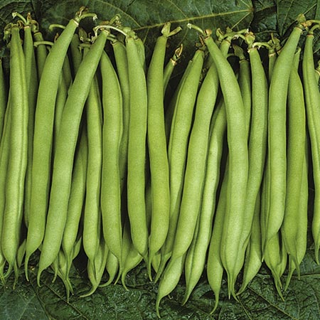 Bean - Dwarf French Speedy Seeds