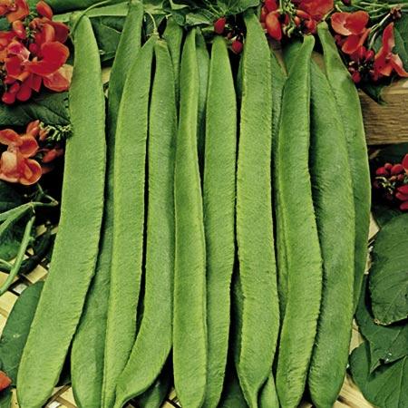 organic seeds uk