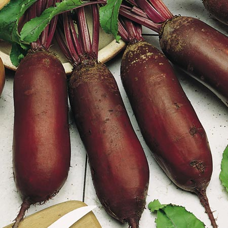 Beetroot F1 Alto Seeds