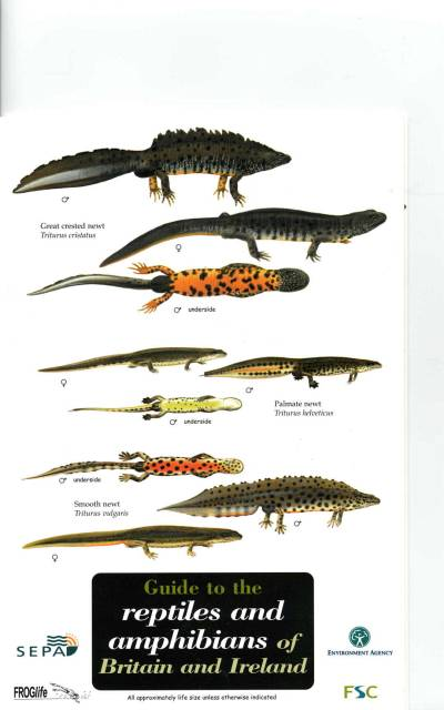 FIELD GUIDE - REPTILES AND AMPHIBIANS OF BRITAIN AND IRELAND