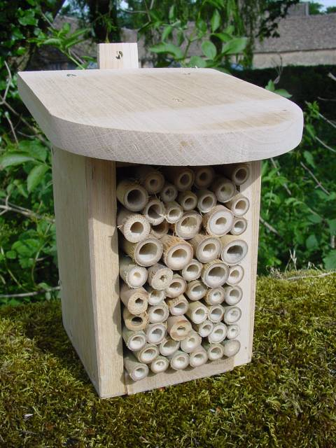 LARCH/OAK/ACACIA BENEFICIAL INSECT BOX