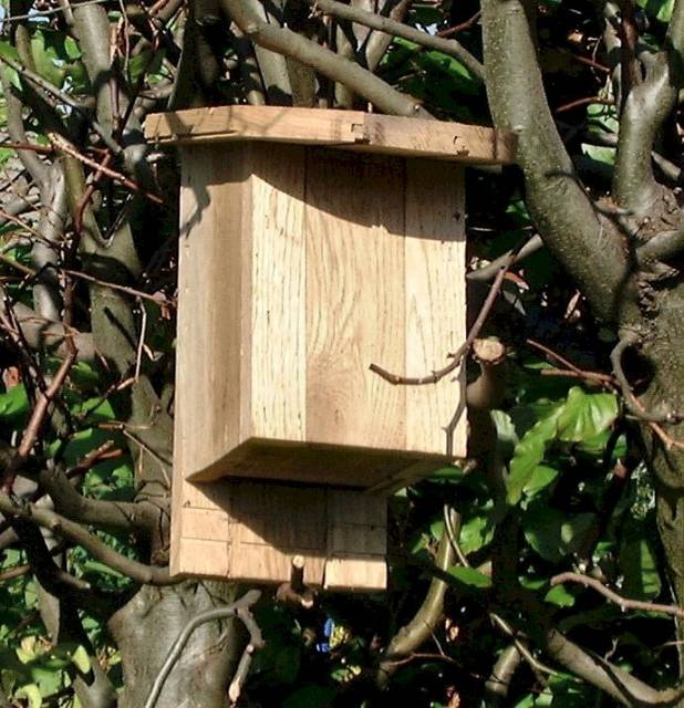 LARCH/OAK/ACACIA BAT BOX