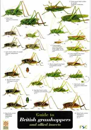 FIELD GUIDE - GRASSHOPPERS
