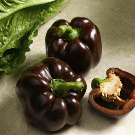 Brown-Skinned Pepper (Eden Project range) : Roceco