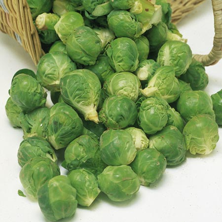 Brussels Sprouts Bedford - Fillbasket Seeds