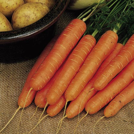 Carrot F1 Nelson Seeds