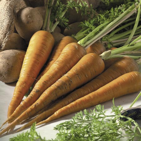 Carrot Red Intermediate Seeds