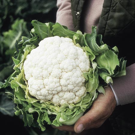 Cauliflower Patriot Seeds