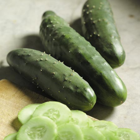 Cucumber F1 Prima Top Seeds