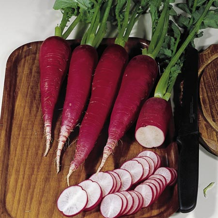 German Salad Radish (Eden Project range)