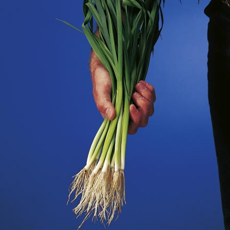 Leek Atal Speedy Seeds