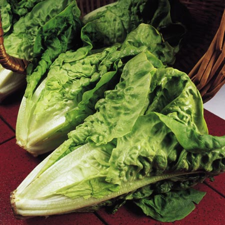 Lettuce Cos Parris Island Seeds