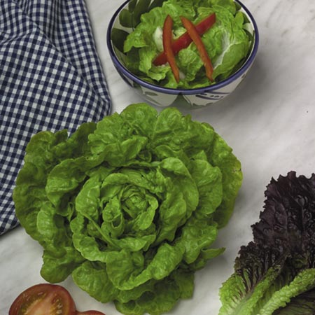 Lettuce Tom Thumb Seeds