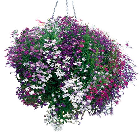 What flowers should i use for low maintenance cheap Hanging basket flowers