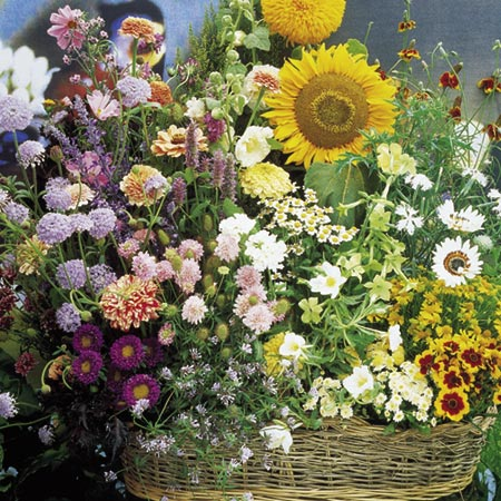 Mixed Flower Seed - Cottage Garden Mixture