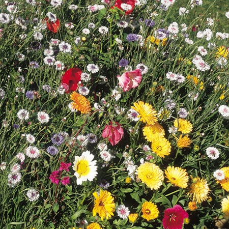 Mixed flower seed tall varieties roceco ecological products mixed flower seed tall varieties mightylinksfo