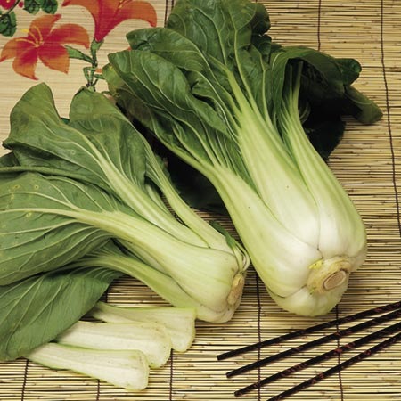 Chinese Pak Choi (Eden Project range)