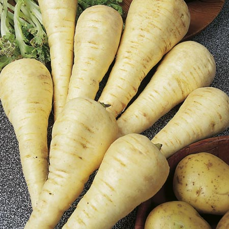 Parsnip F1 Gladiator Seeds