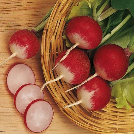 Sparkler Radish Recipe Radish Sparkler 3 Seeds