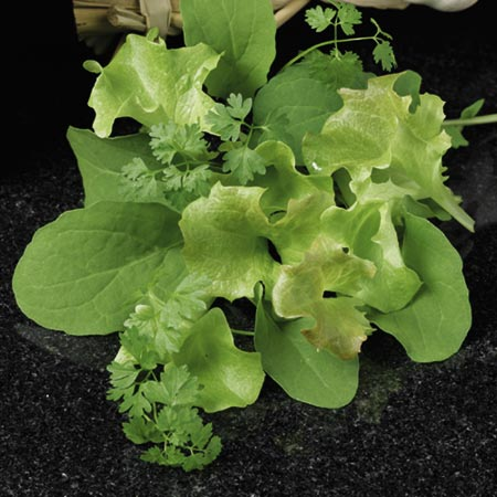 Leaf Salad French Speedy Seeds