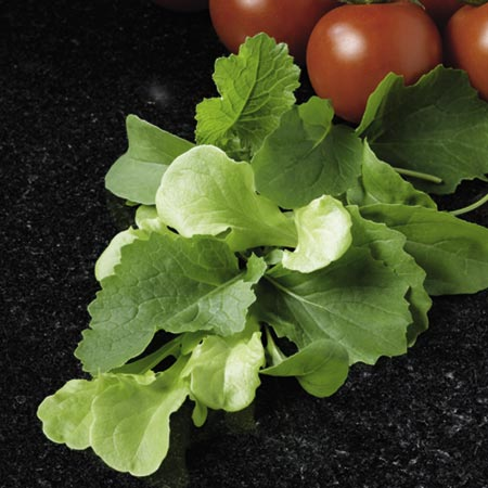 Leaf Salad Italian Speedy Seeds