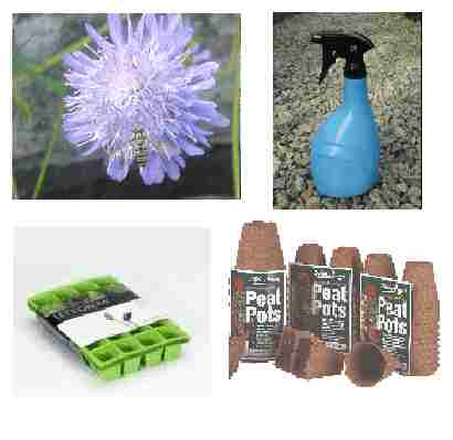 Wildflower seed & propagation pack
