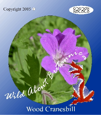 24 Cranesbill Wild Flower Postcards
