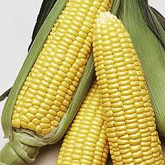 Sweetcorn Supersweet