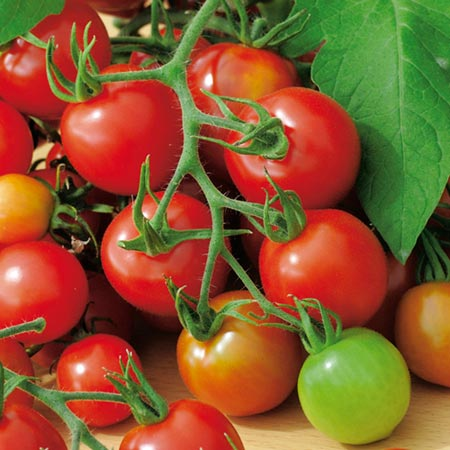 Tomato Red Alert Seeds