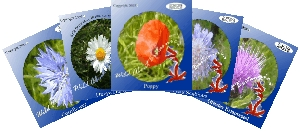 Summer Meadow multi-pack